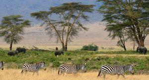 Sumber : http://commons.wikimedia.org/wiki/File:Zebras,_Serengeti_savana_plains,_Tanzania.jpg